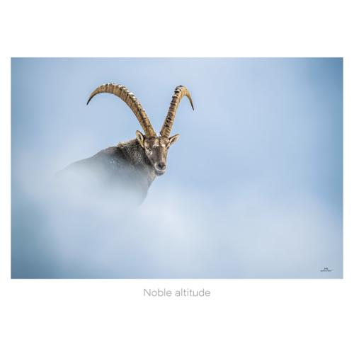 Noble altitude