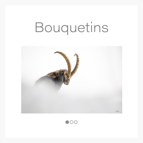 cat_bouquetin