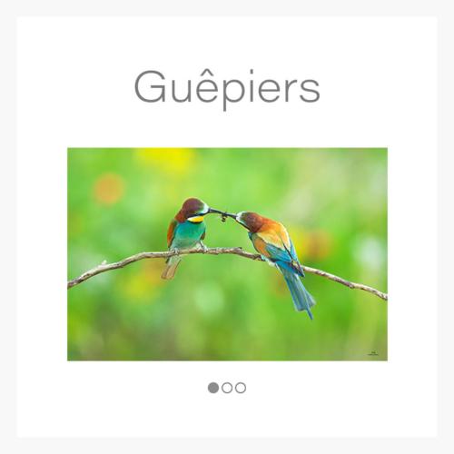 cat_guepier