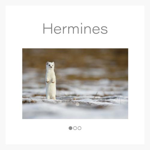 cat_hermine