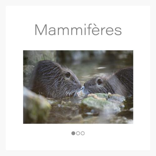 cat_mammifere