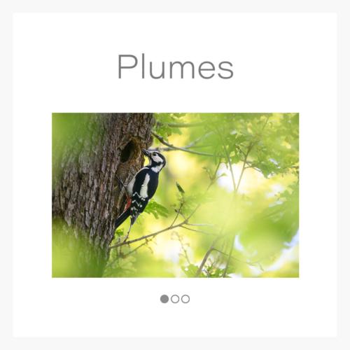 cat_plume