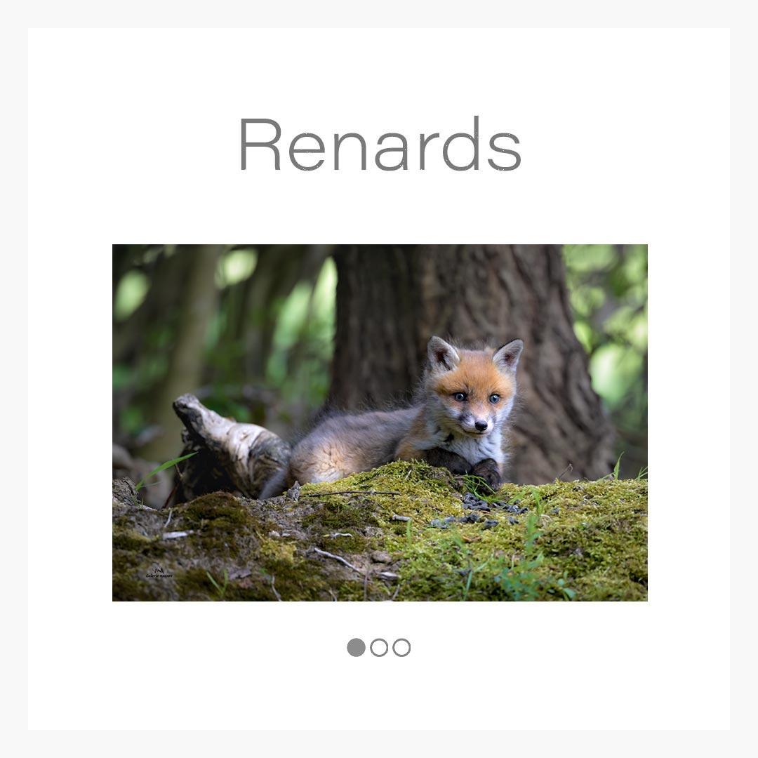 cat_renard
